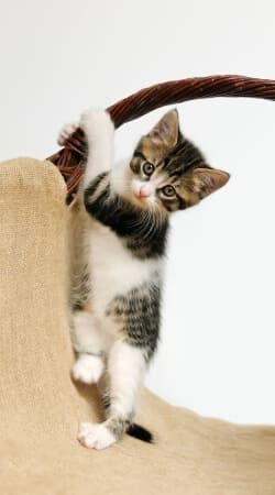 cover Baby cat, cute kitten climbing
