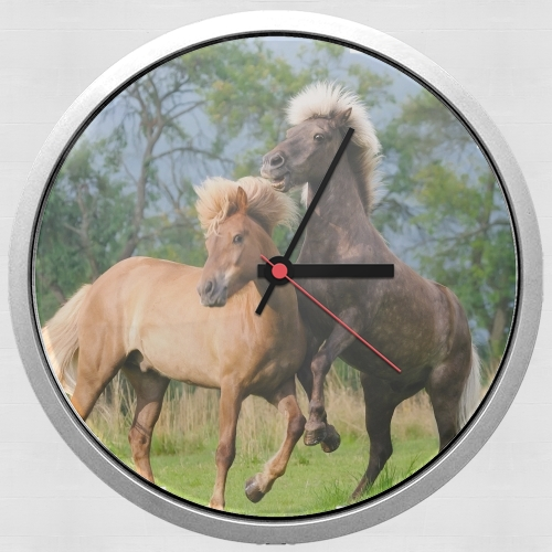 Two Icelandic horses playing, rearing and frolic around in a meadow for Wall clock