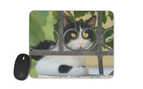 Cat with spectacles frame, she looks through a wrought iron fence for Mousepad