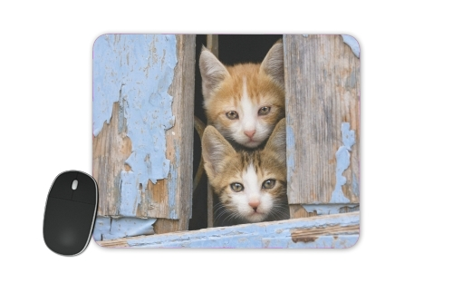Cute curious kittens in an old window for Mousepad
