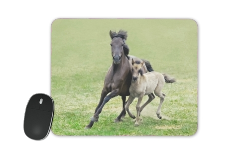 Horses, wild Duelmener ponies, mare and foal for Mousepad