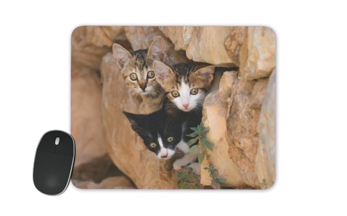 Three cute kittens in a wall hole for Mousepad