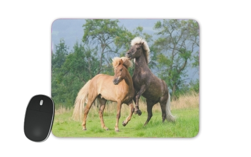 Two Icelandic horses playing, rearing and frolic around in a meadow for Mousepad