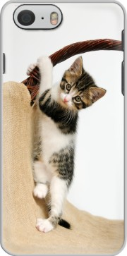Baby cat, cute kitten climbing Case for Iphone 6 4.7