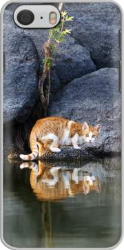 Cat Reflection in Pond Water Iphone 6 4.7 Case