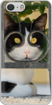 Cat with spectacles frame, she looks through a wrought iron fence Case for Iphone 6 4.7
