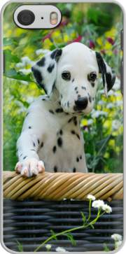 Cute Dalmatian puppy in a basket  Case for Iphone 6 4.7