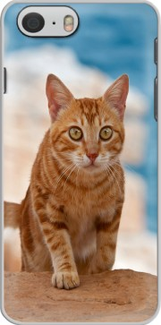 Ginger kitten on a cliff Case for Iphone 6 4.7