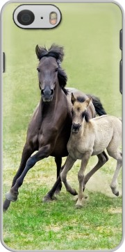 Horses, wild Duelmener ponies, mare and foal Case for Iphone 6 4.7