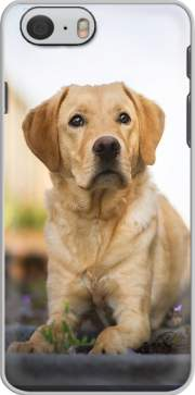 Labrador Dog Iphone 6 4.7 Case