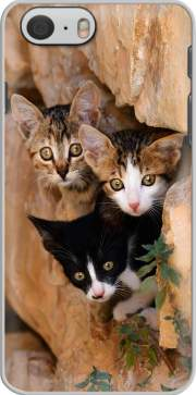 Three cute kittens in a wall hole for Iphone 6 4.7