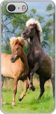Two Icelandic horses playing, rearing and frolic around in a meadow Case for Iphone 6 4.7