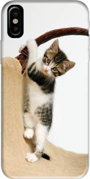 Baby cat, cute kitten climbing Case for Iphone X / Iphone XS