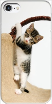 Baby cat, cute kitten climbing Case for Iphone 7 / Iphone 8