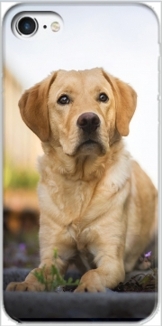 Labrador Dog Iphone 7 / Iphone 8 Case