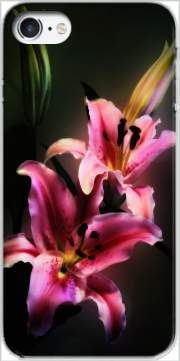 Painting Pink Stargazer Lily Case for Iphone 7 / Iphone 8
