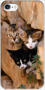 Three cute kittens in a wall hole Case for Iphone 7 / Iphone 8