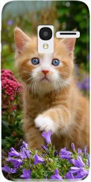 Cute ginger kitten in a flowery garden, lovely and enchanting cat Case for Alcatel Pixi 3 4.5 3G 4027X
