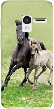 Horses, wild Duelmener ponies, mare and foal Case for Alcatel Pixi 3 4.5 3G 4027X