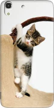 Baby cat, cute kitten climbing Case for Huawei Honor 4A