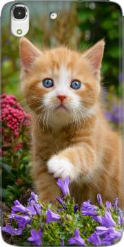 Cute ginger kitten in a flowery garden, lovely and enchanting cat Case for Huawei Honor 4A