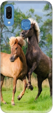 Two Icelandic horses playing, rearing and frolic around in a meadow Case for Honor Play Cor-L29