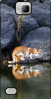 Cat Reflection in Pond Water Huawei Honor 3C Case