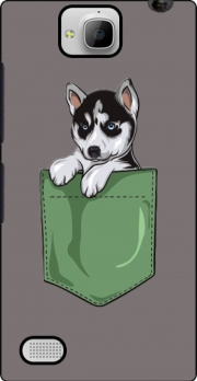 Husky Dog in the pocket Huawei Honor 3C Case