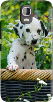 Cute Dalmatian puppy in a basket  Case for Huawei Y3 Y360