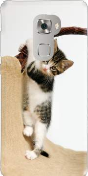Baby cat, cute kitten climbing Case for Huawei Mate S