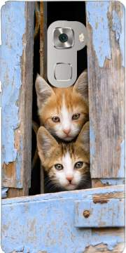 Cute curious kittens in an old window Huawei Mate S Case