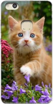Cute ginger kitten in a flowery garden, lovely and enchanting cat for Huawei P10 Lite