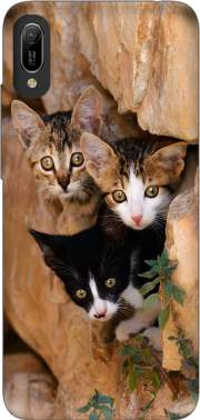 Three cute kittens in a wall hole for Huawei Y6 2019