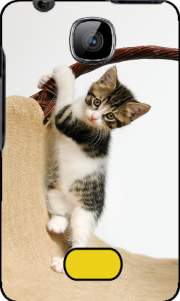 Baby cat, cute kitten climbing Case for Nokia Asha 501