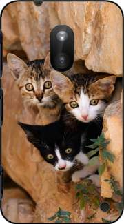 Three cute kittens in a wall hole Case for Nokia Lumia 620