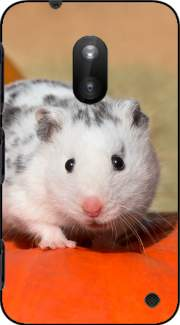 White Dalmatian Hamster with black spots  Case for Nokia Lumia 620