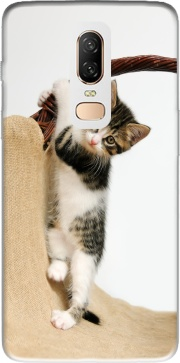 Baby cat, cute kitten climbing Case for OnePlus 6
