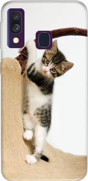 Baby cat, cute kitten climbing Case for Samsung Galaxy A40