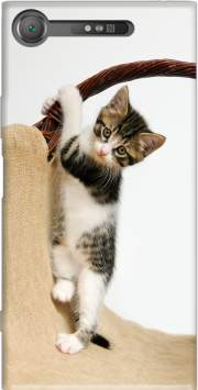 Baby cat, cute kitten climbing Case for Sony Xperia XZ1