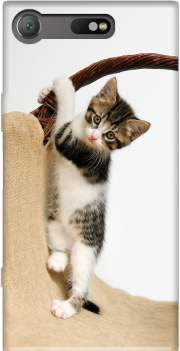 Baby cat, cute kitten climbing Case for Sony Xperia XZ1 Compact