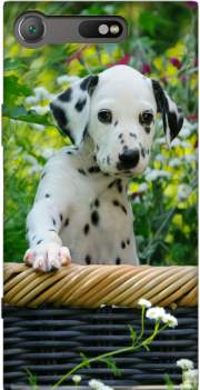 Cute Dalmatian puppy in a basket  Case for Sony Xperia XZ1 Compact