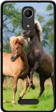 Two Icelandic horses playing, rearing and frolic around in a meadow Case for Wiko Tommy 2