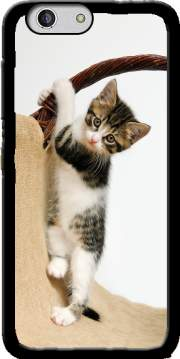 Baby cat, cute kitten climbing Case for Zte Blade A512