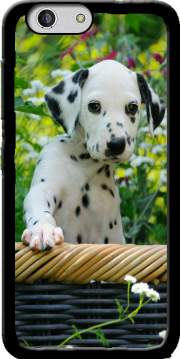 Cute Dalmatian puppy in a basket  Case for Zte Blade A512