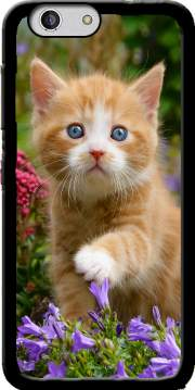 Cute ginger kitten in a flowery garden, lovely and enchanting cat Case for Zte Blade A512