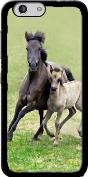 Horses, wild Duelmener ponies, mare and foal Case for Zte Blade A512