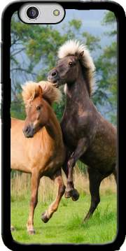 Two Icelandic horses playing, rearing and frolic around in a meadow Case for Zte Blade A512