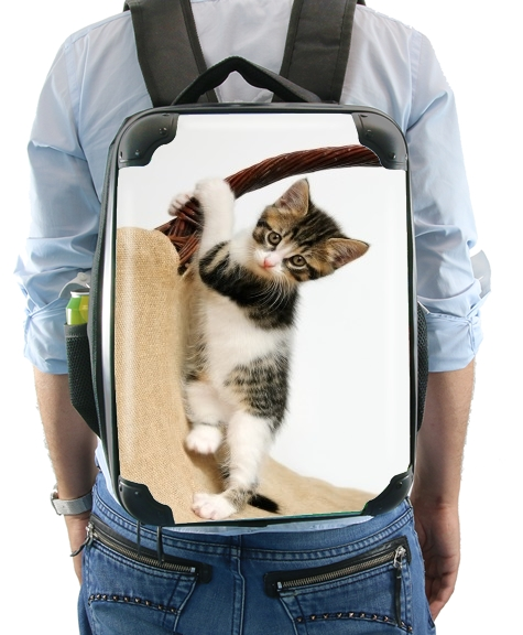 Baby cat, cute kitten climbing for Backpack