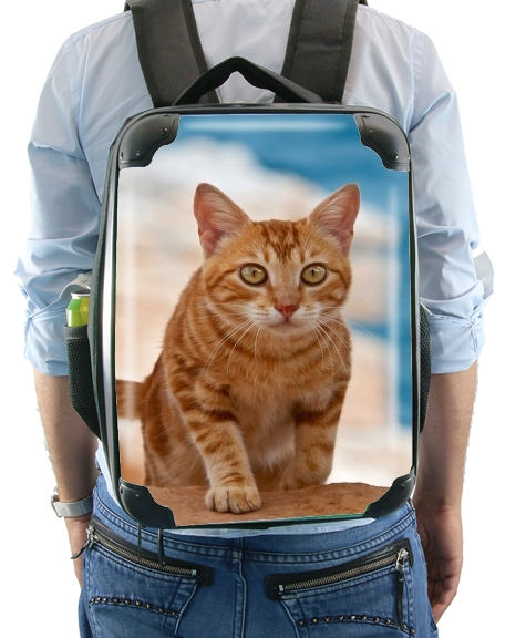 Ginger kitten on a cliff for Backpack