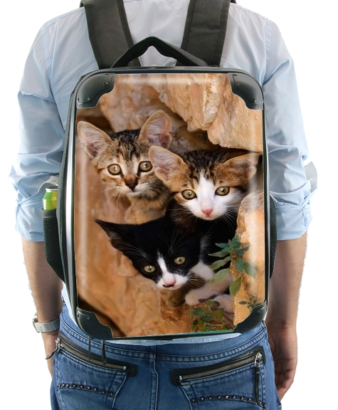 Three cute kittens in a wall hole for Backpack